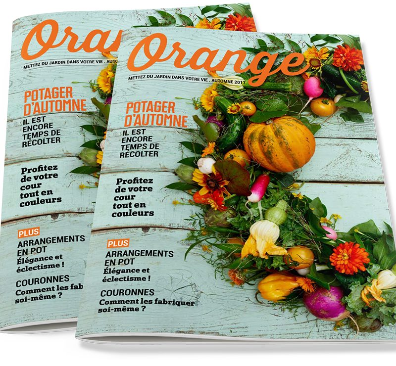Magazine_Orange_Cover
